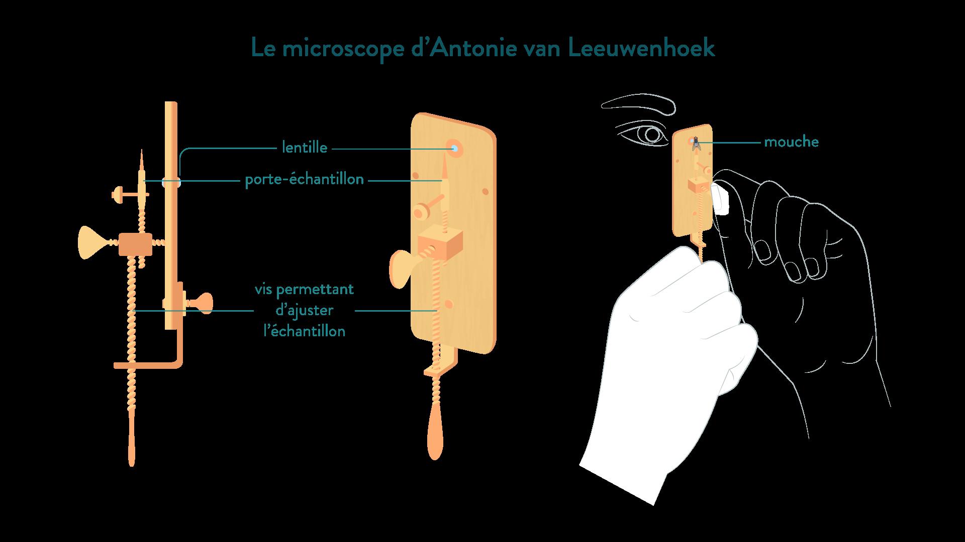 microscope van Leeuwenhoek