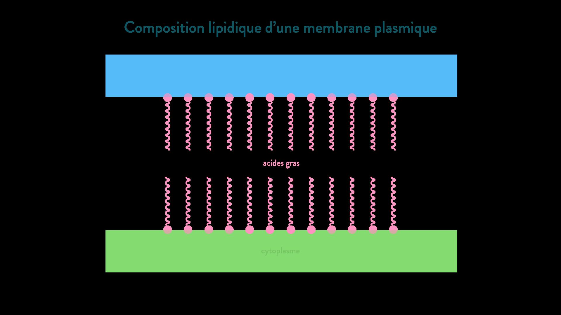 membrane plasmique composition lipidique acides gras