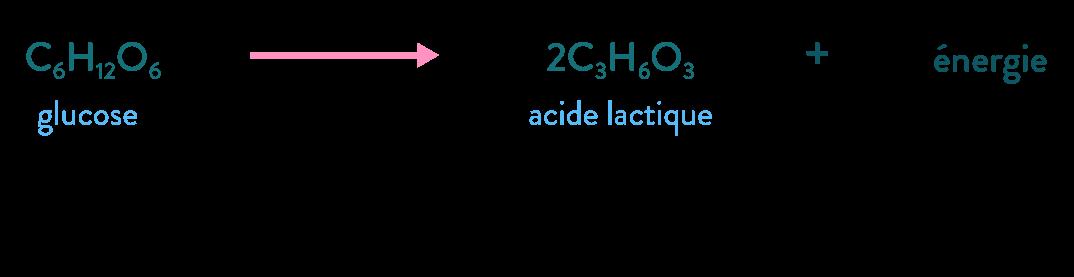 équation fermentation lactique glucose énergie