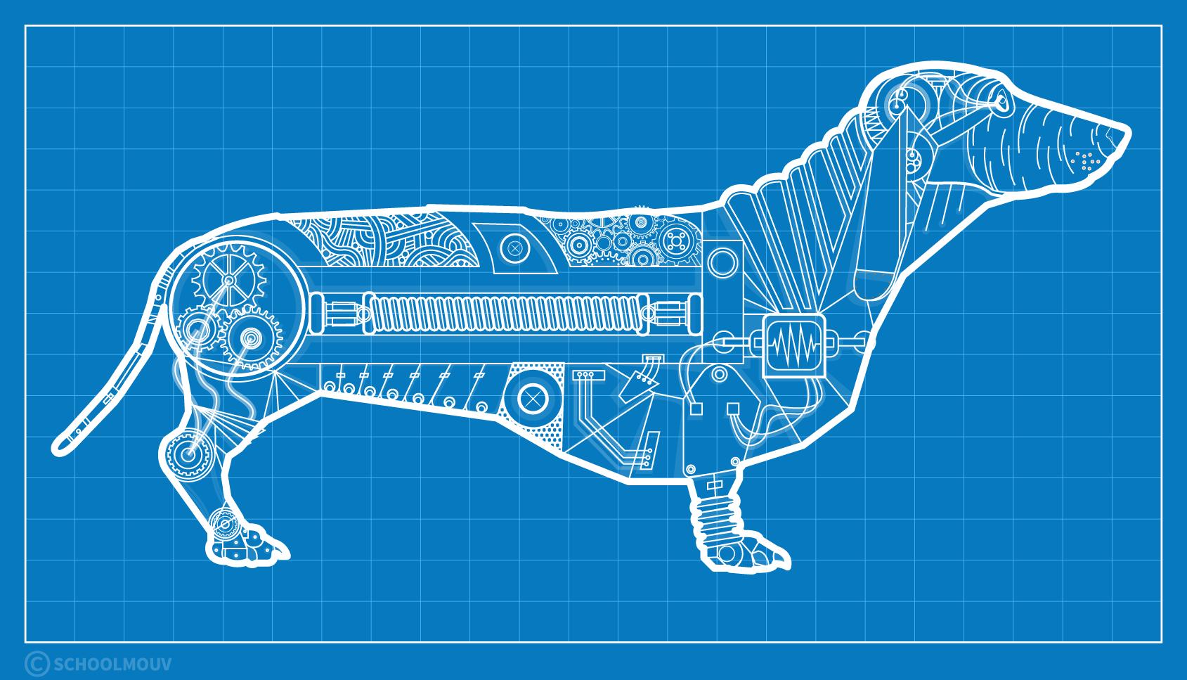 animal machine René Descartes
