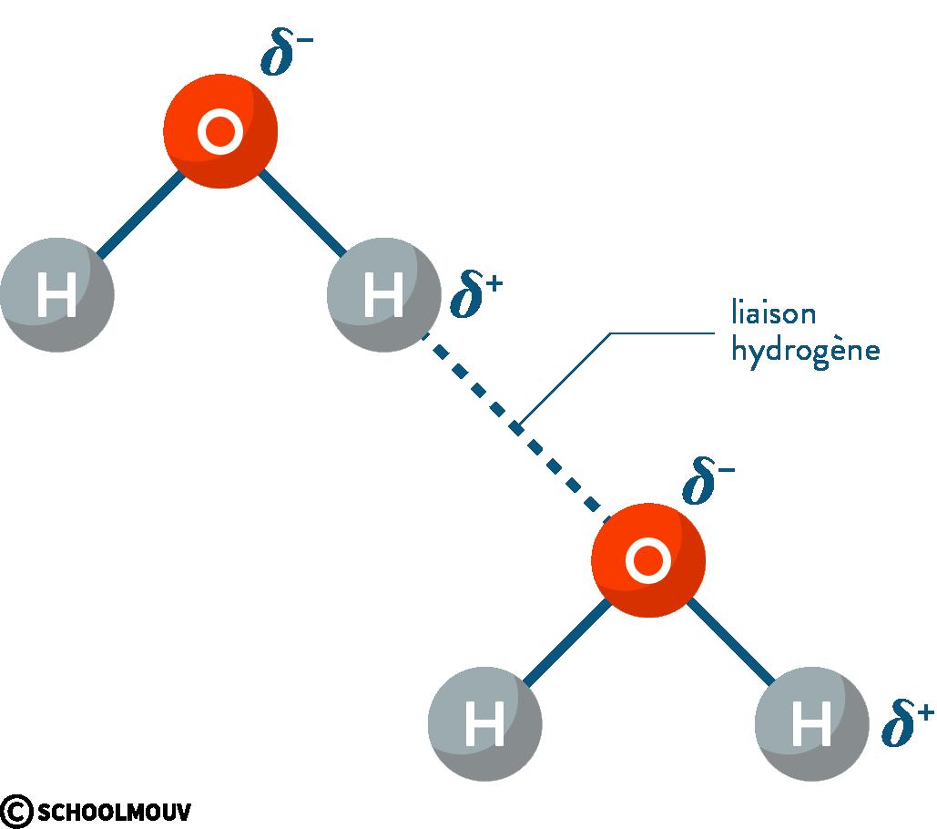 physique chimie première réforme cohésion matière liaison hydrogène