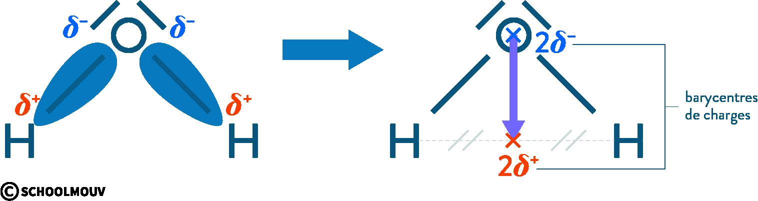 physique chimie première réforme polarité électronégativité molécule eau