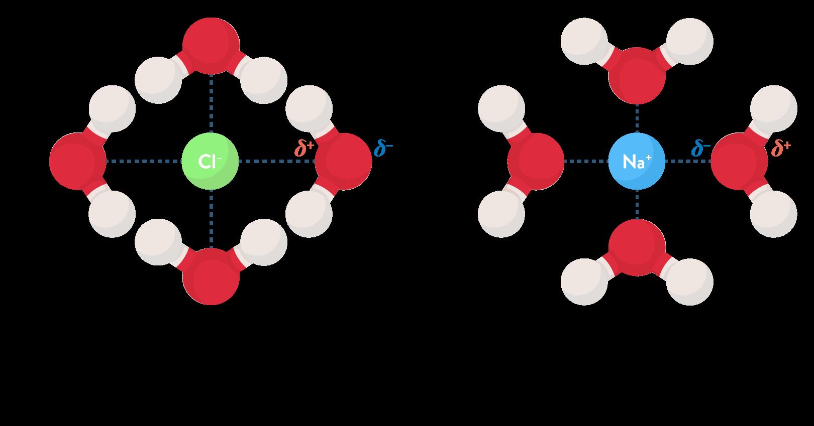 physique chimie première réforme solubilité extraction solvant solvatation anion cation