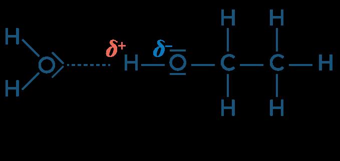 physique chimie première réforme solubilité extraction solvant solvatation éthanol