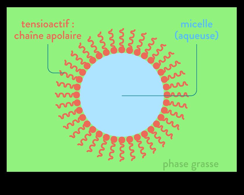 physique chimie première réforme solubilité extraction solvant tensioactif
