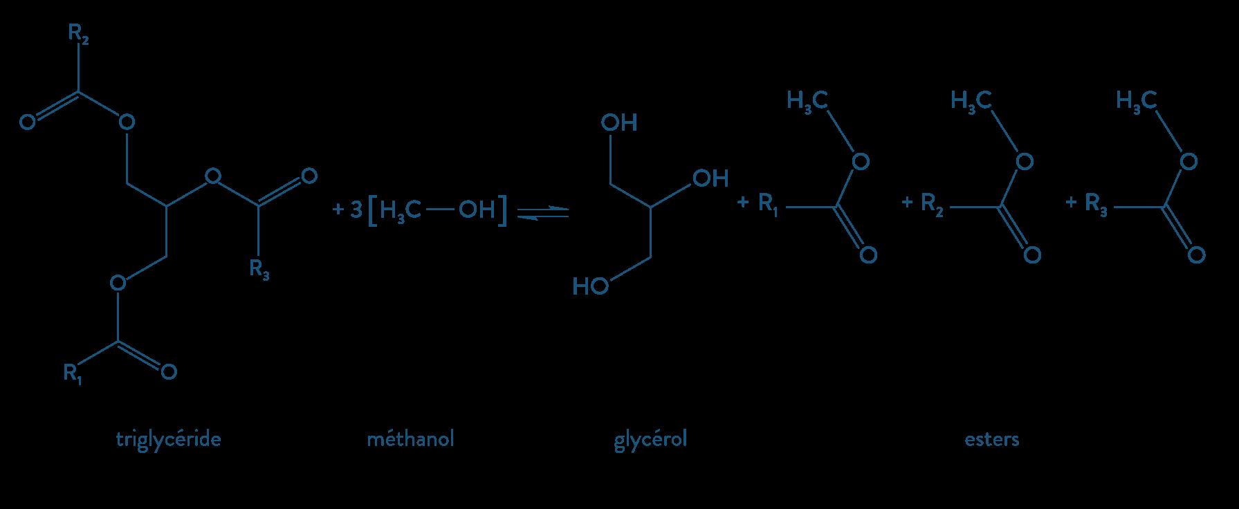 physique chimie première réforme synthèse organique biodiesel transestérification ester