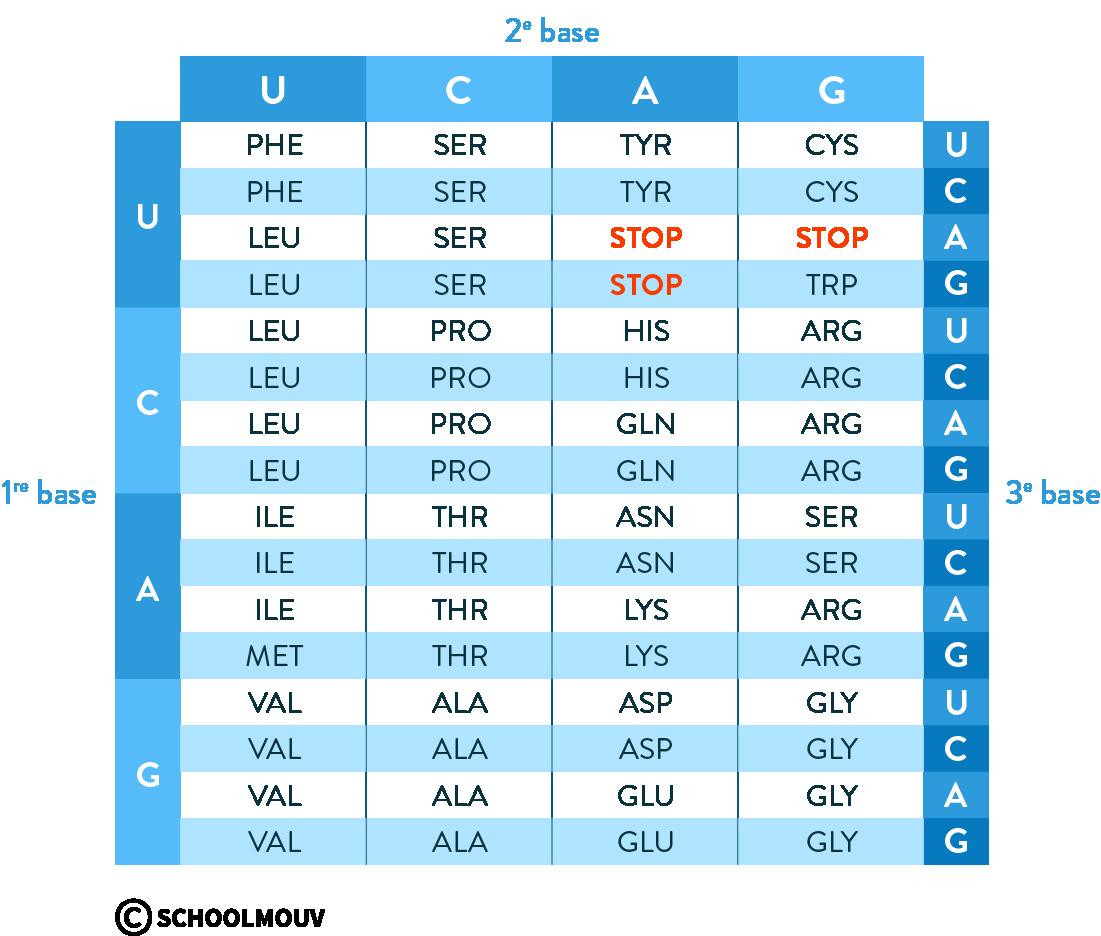 code génétique protéine codon stop
