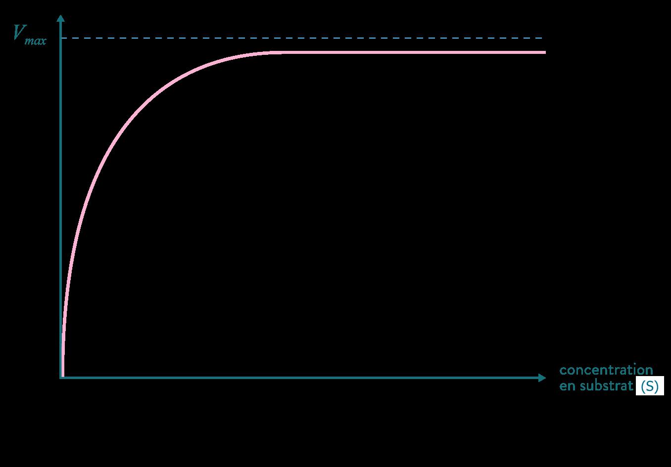 réaction enzymatique Vmax substrat
