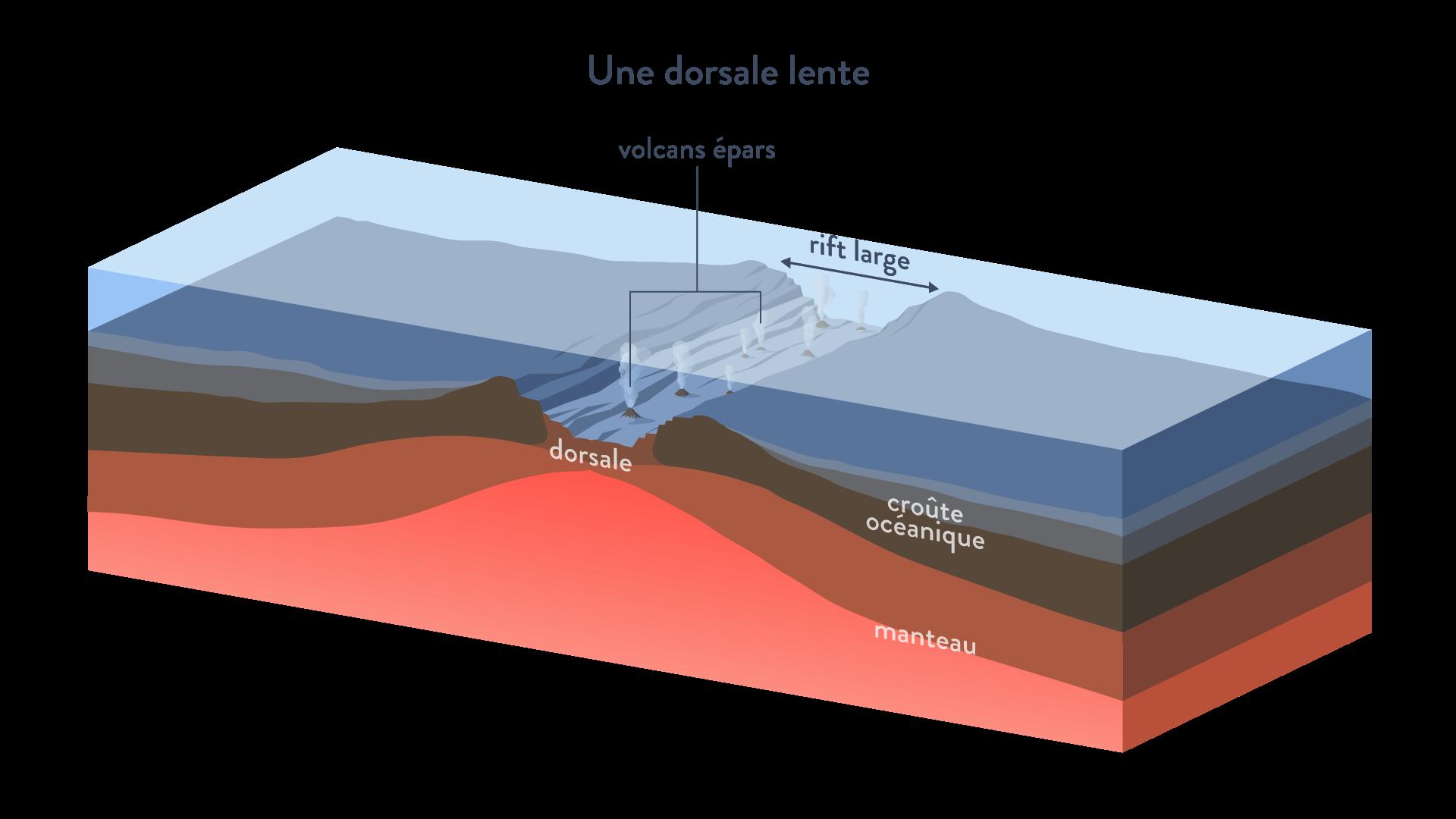 Dorsale lente rift large volcans croûte océanique manteau divergence plaques tectoniques svt première