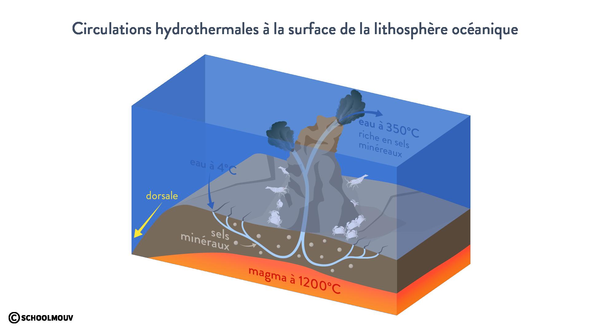 Circulations hydrothermales à la surface de la lithosphère océanique svt première