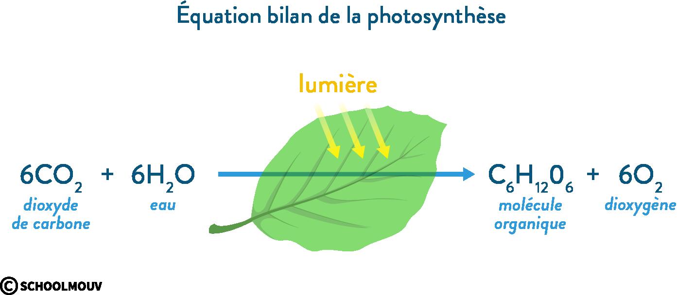 équation bilan de la photosynthèse dioxyde de carbone eau molécule organique dioxygène lumière svt première écosystèmes