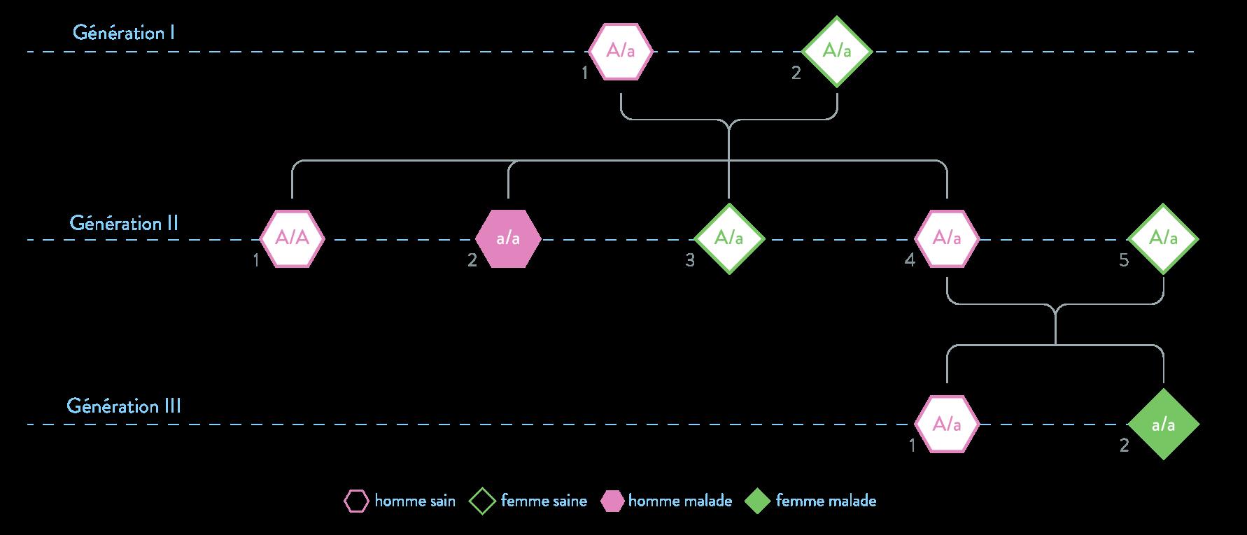 mucoviscidose arbre généalogique allèle