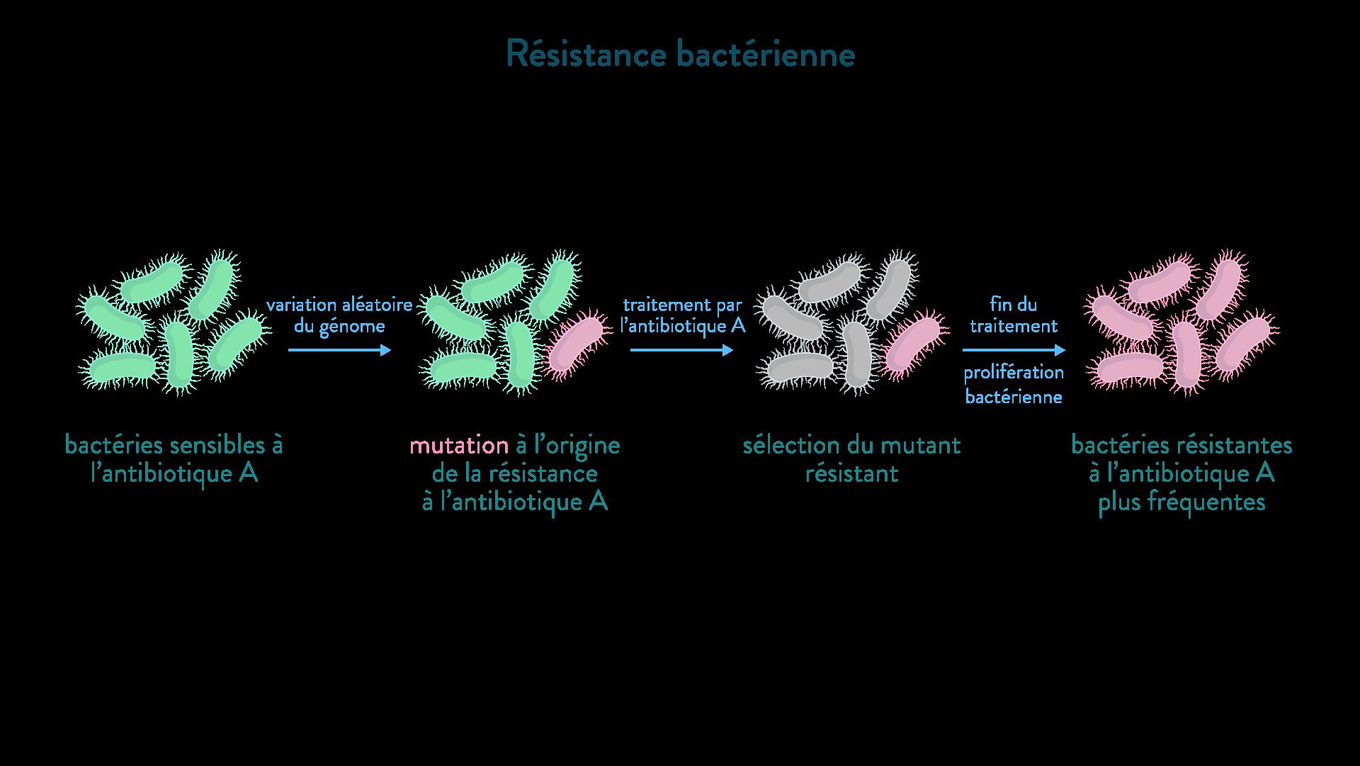 résistance bactérienn mutation