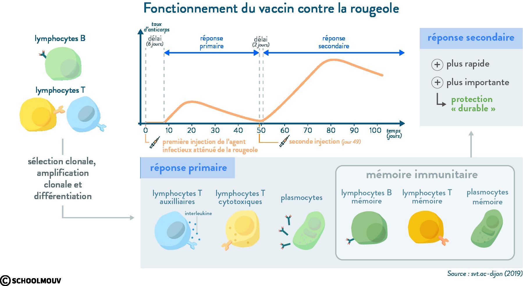 vaccin rougeole réponse primaire réponse secondaire