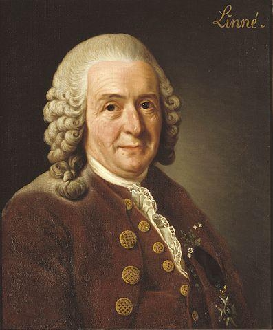 Portrait de CarlvonLinné par AlexanderRoslin, 1775, huile sur toile, 56×46cm