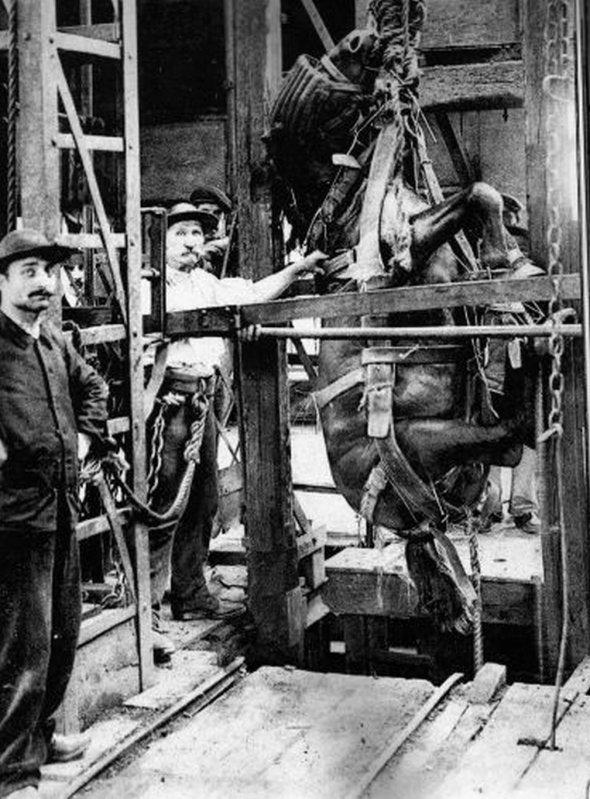 Descente d'un cheval dans une mine au début du XX<sup>e</sup>siècle