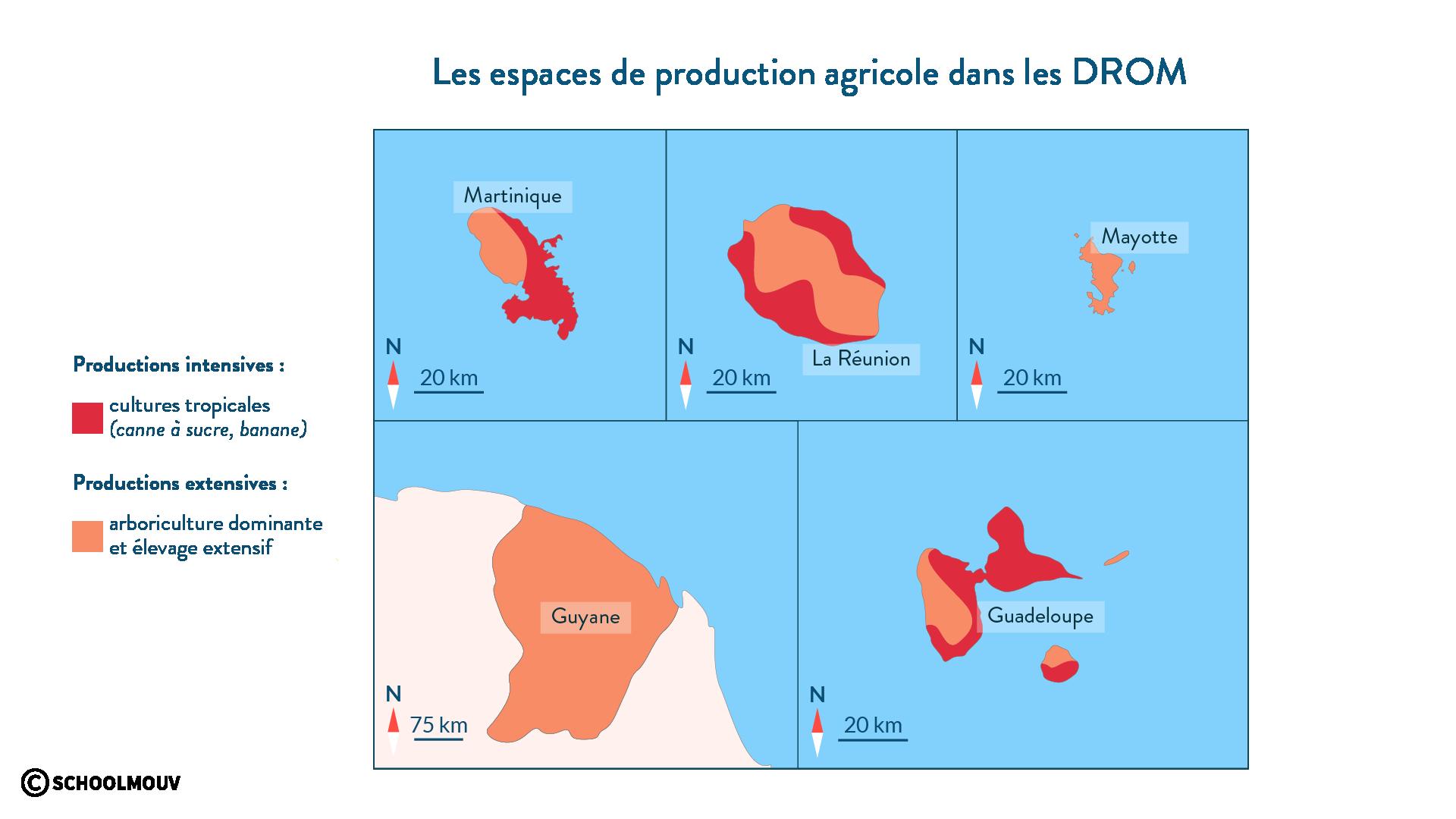 Les espaces de production agricole dans les DROM - SchoolMouv- géographie - 2de