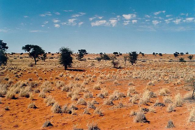 Paysage du Kalahari, Namibie- géo - 2de - SchoolMouv