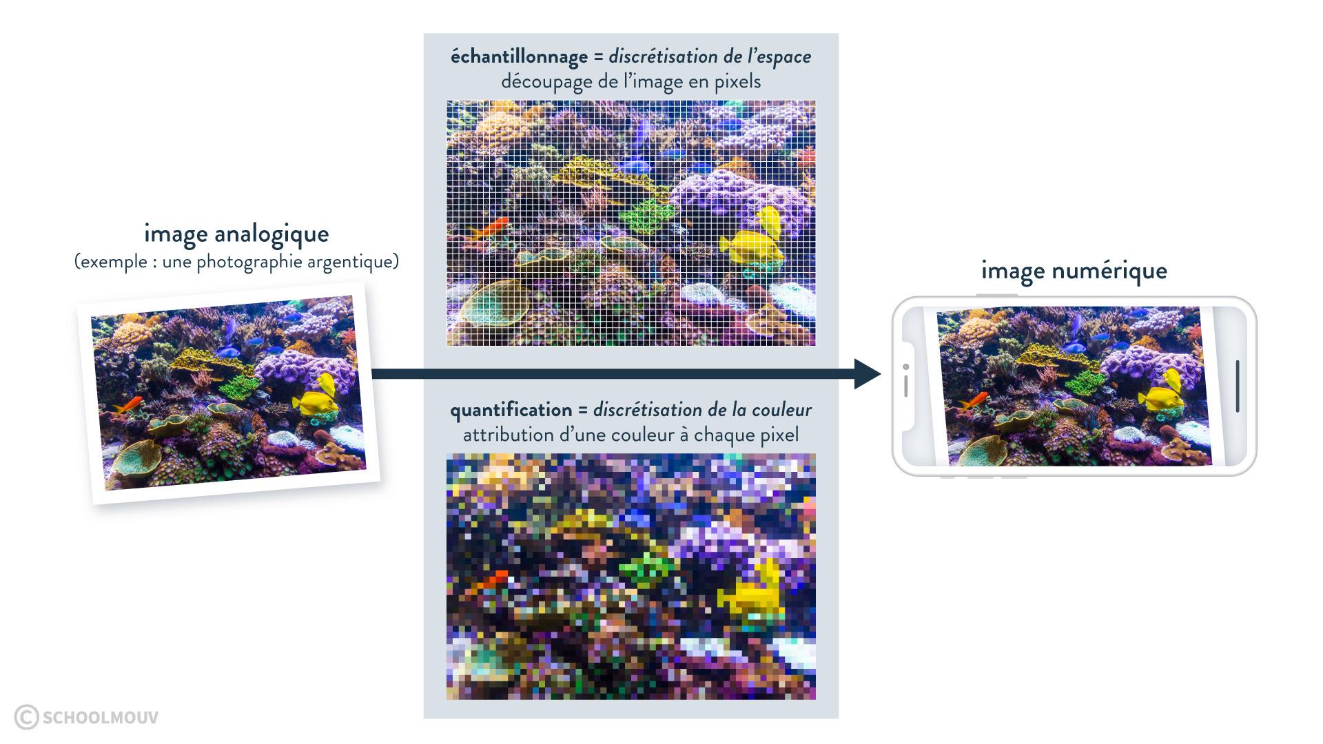 échantillonnage quantification discrétisation espace couleur pixel image analogique à numérique Sciences numériques et technologie Seconde L'image numérique