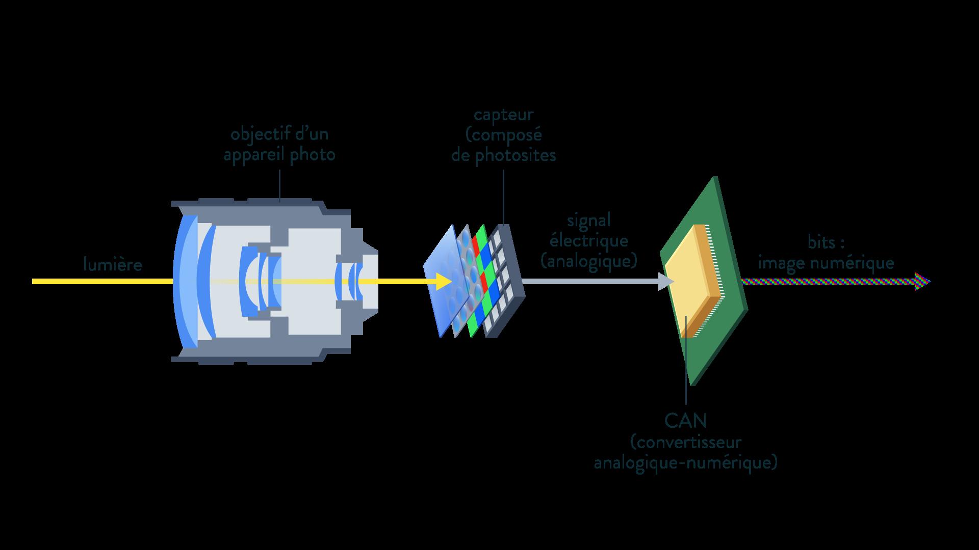 lumière objectif appareil photo capteur photosites signal électrique signal numérique bits CAN convertisseur analogique numérique Sciences numériques et technologie Seconde Comment est captée une image ?