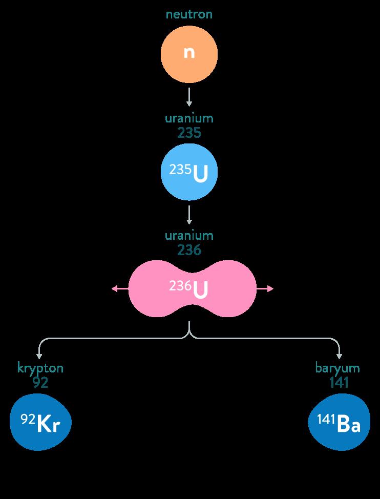 La fission de l'uranium 235