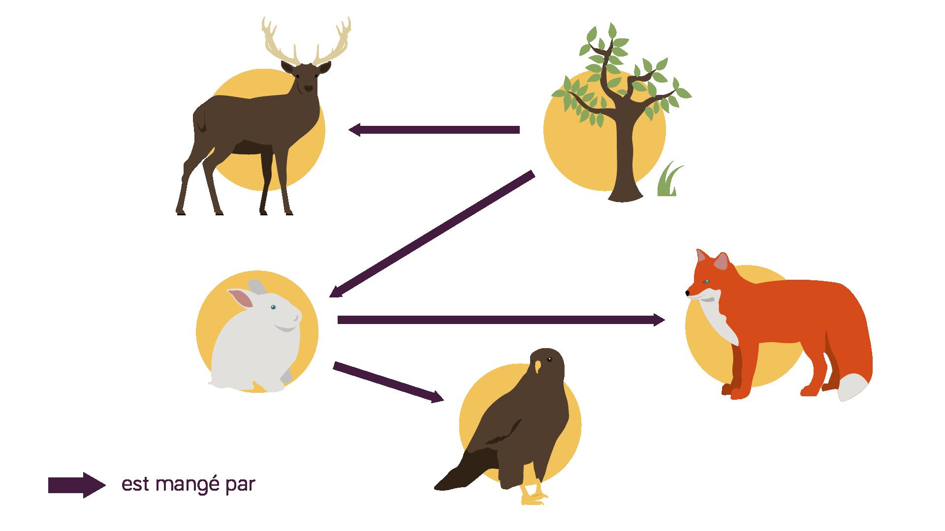 Schéma d'un réseau trophique métabolisme