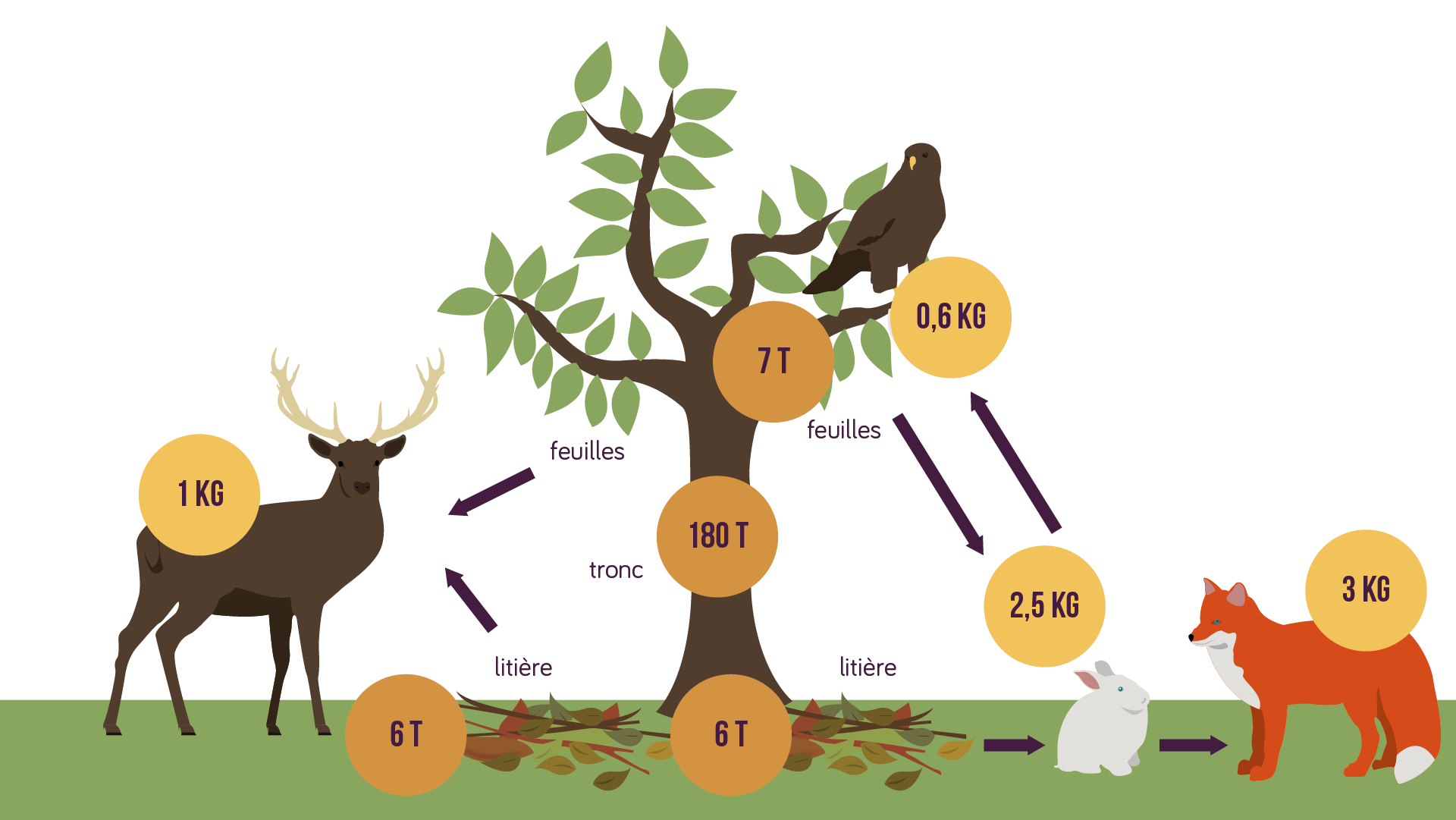 La biomasse chez les végétaux et chez les animaux