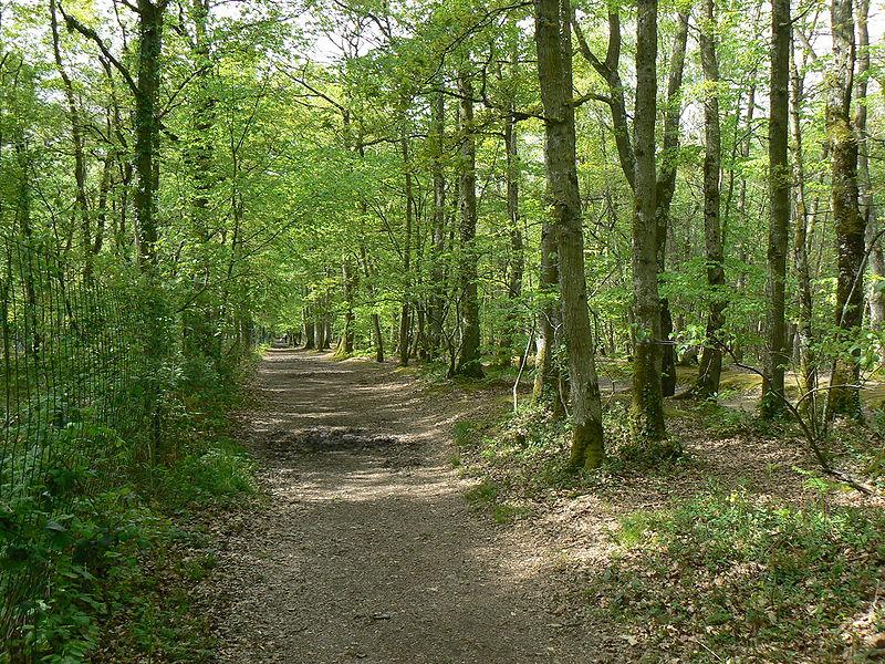 forêt écosyst§me biomasse