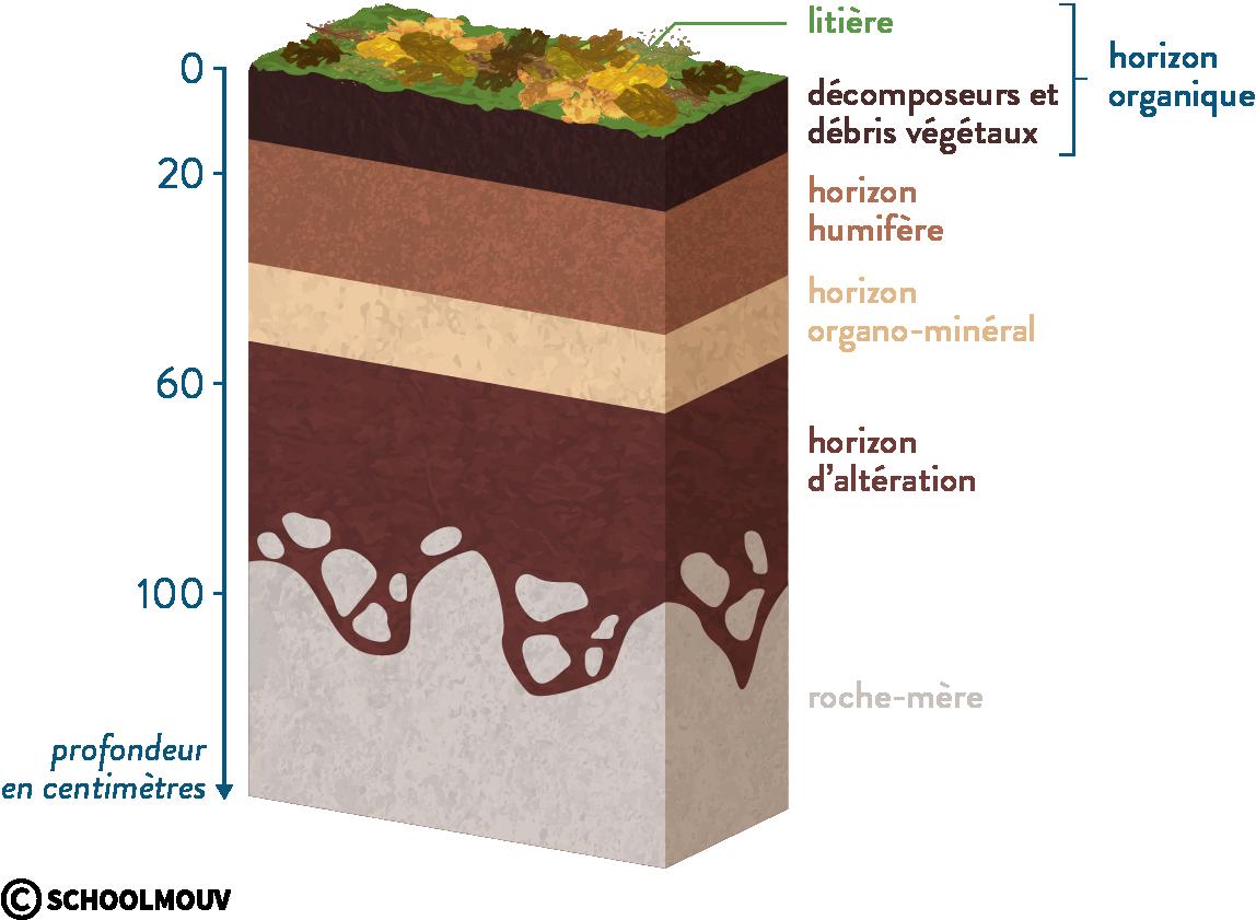 sol horizons roche-mère litière horizon organique horizon humifère horizon organo-minéral