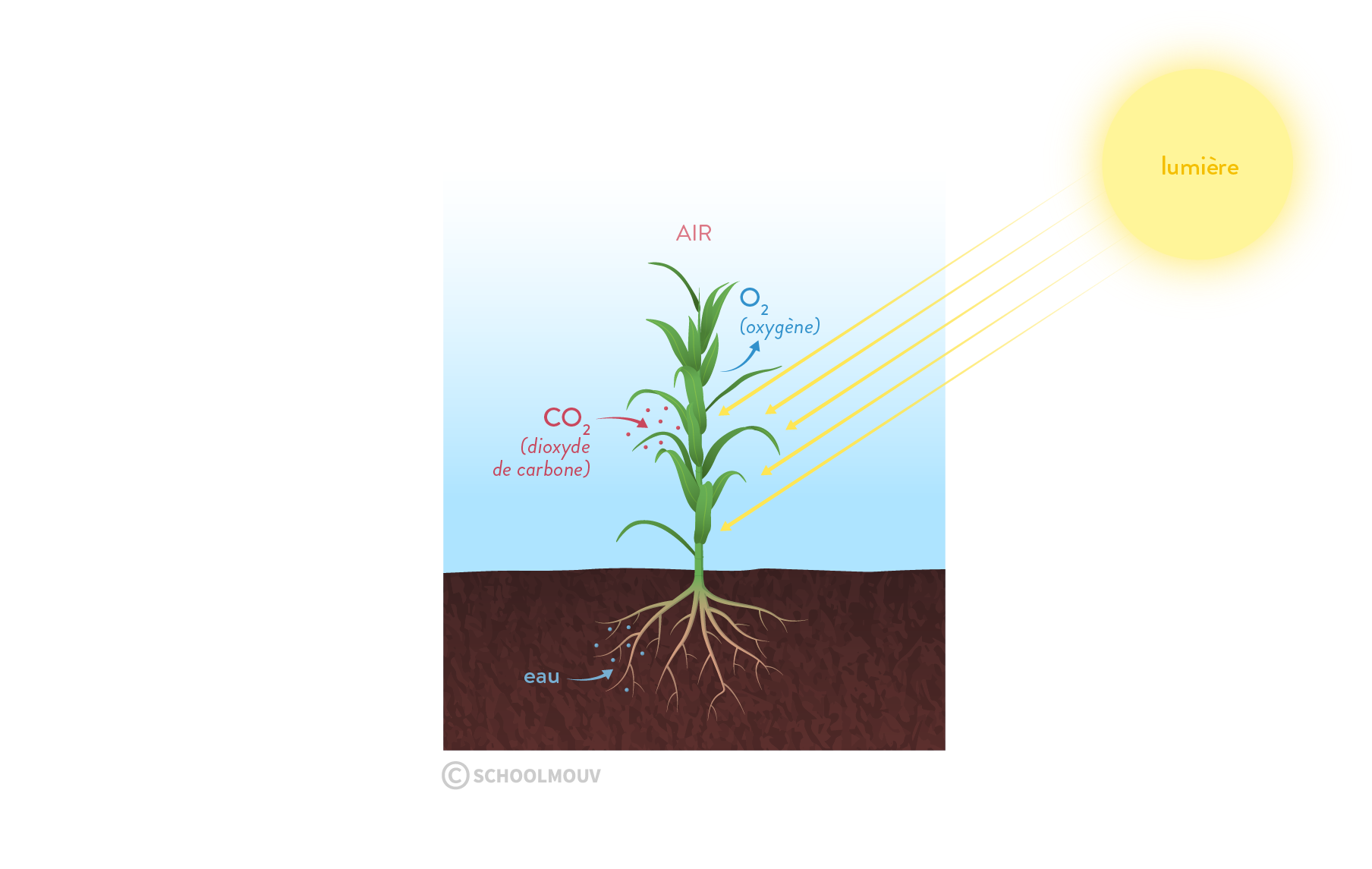 photosynthèse matière organique stockage carbone