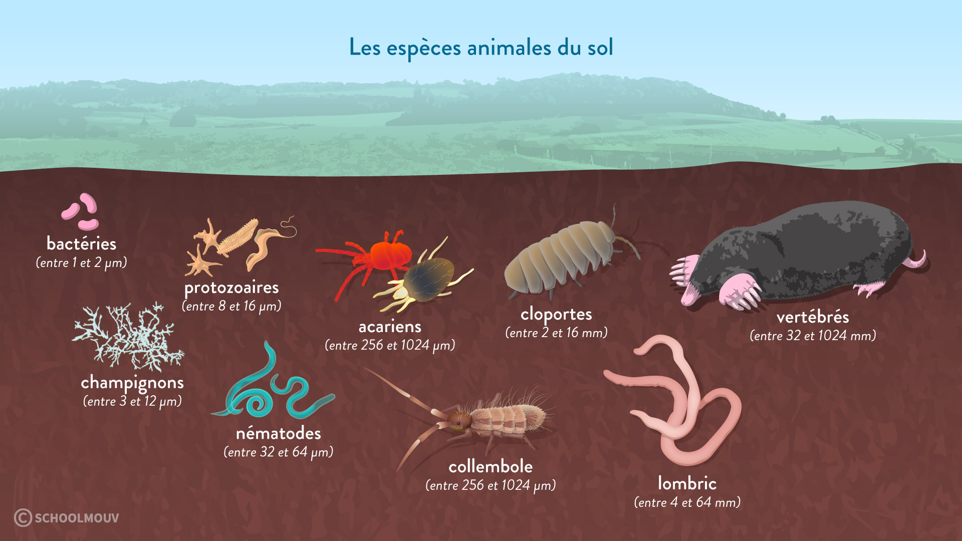 espèces animales du sol pédofaune