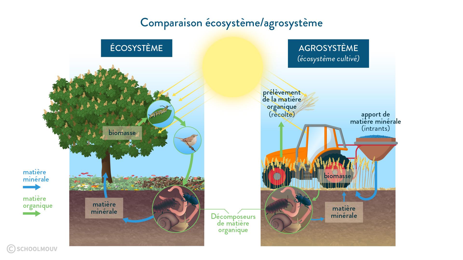 écosystème agrosystème