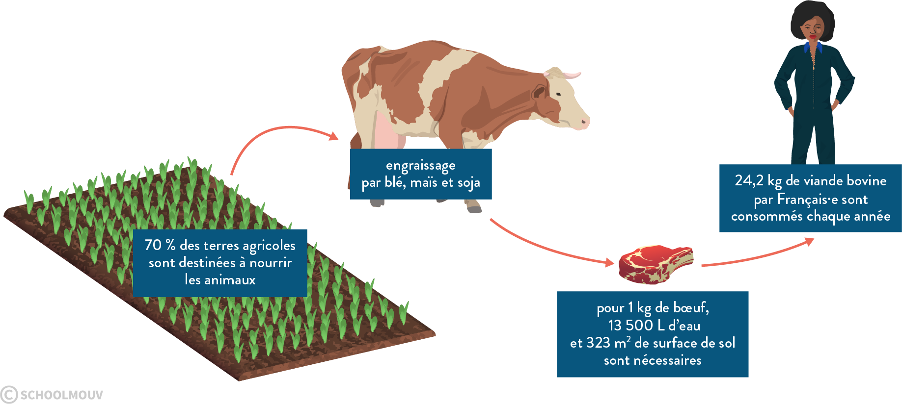 deux agrosystèmes élevage monoculture production animale