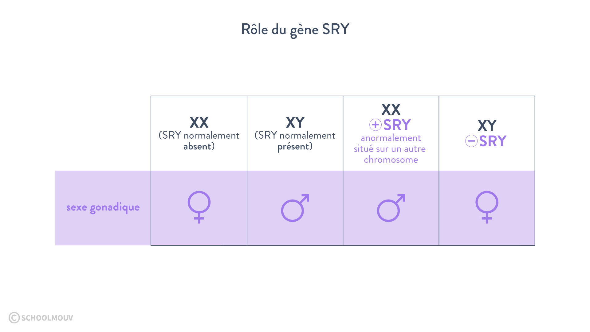 gène SRY rôle caryotype