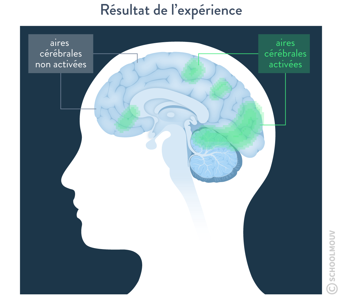 voie du plaisir cerveau IRMf zones cérébrales activées