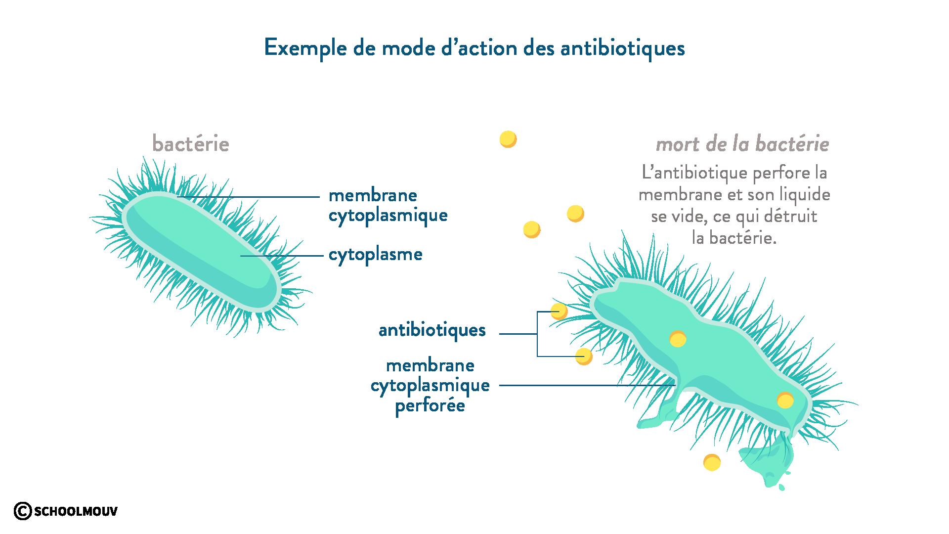antibiotique bactérie mort