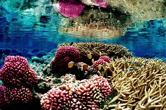 récif corail symbiose photosynthèse