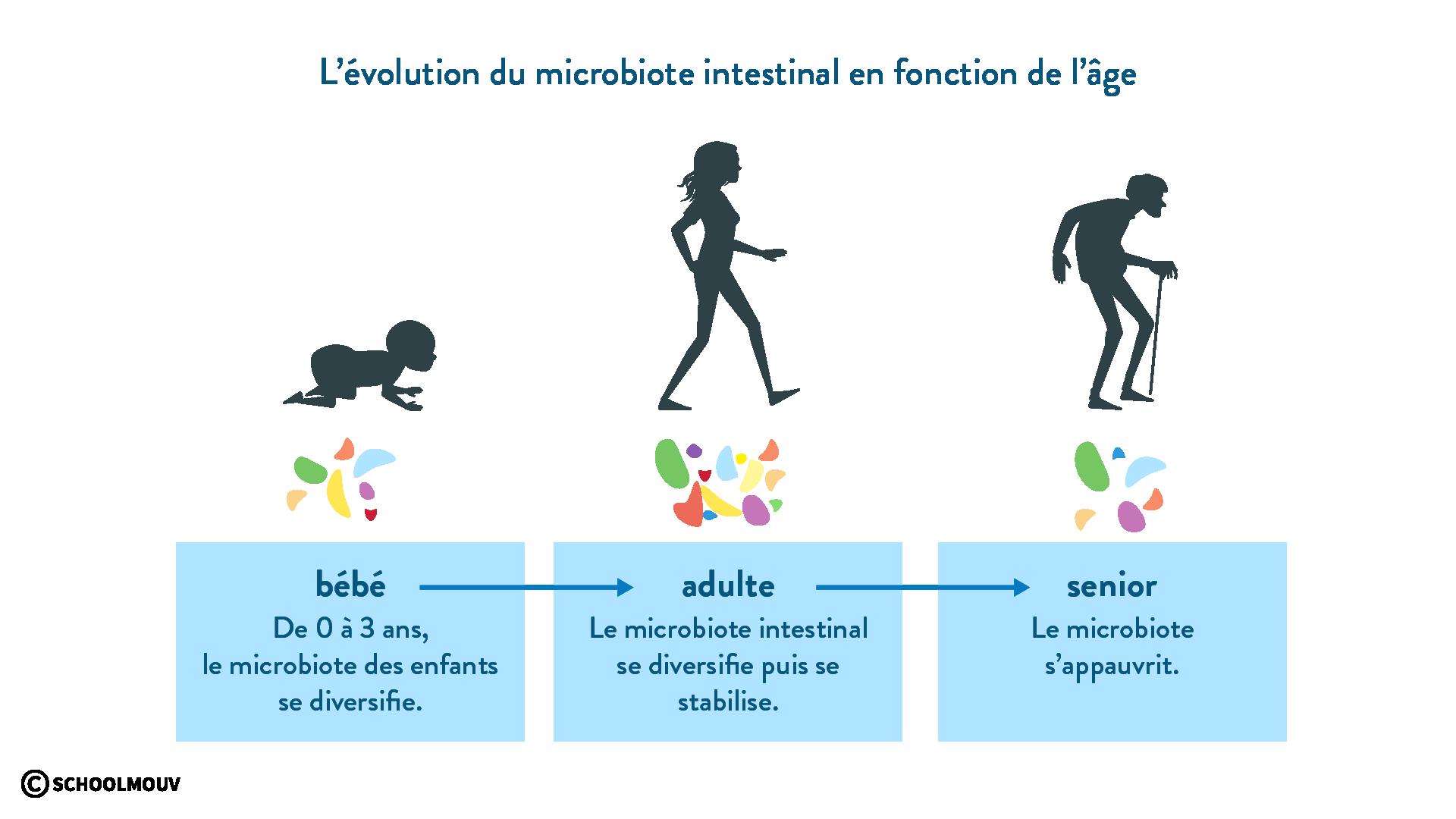 évolution microbiote intestinal