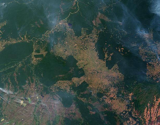 vue satellite État du Rondonia Brésil déboisement