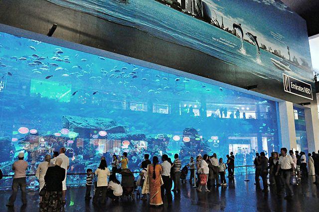 tourisme aquarium Dubai Mall