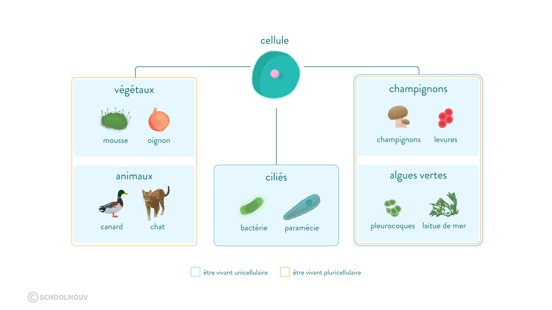 unicellulaires et pluricellulaires