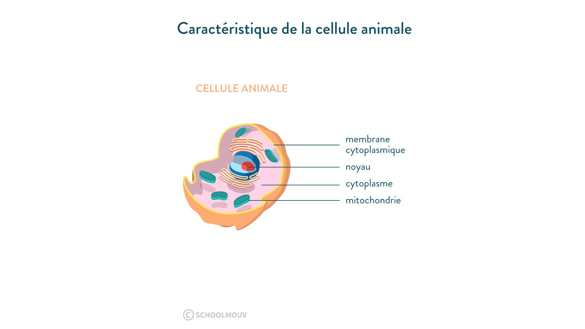 Caractéristique de la cellule animale