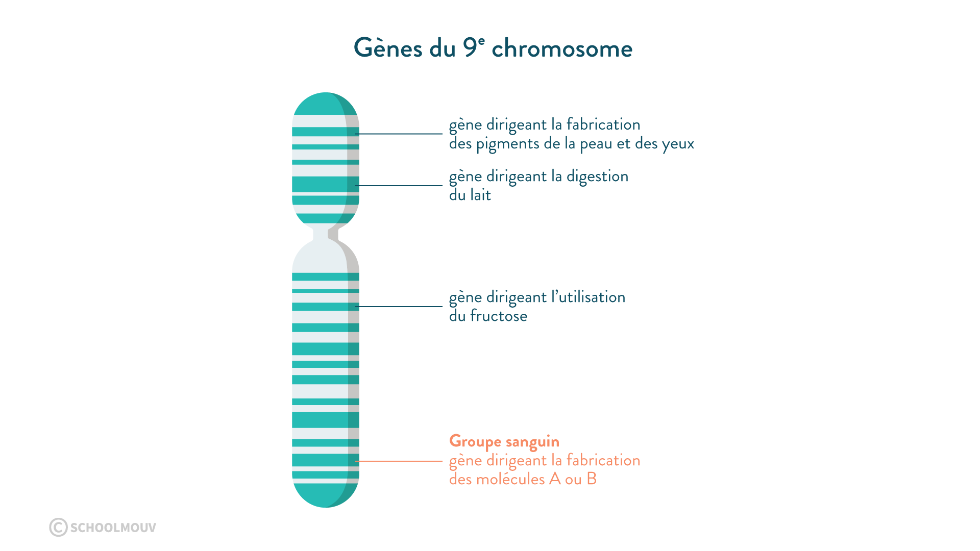 gènes 9e chromosomes