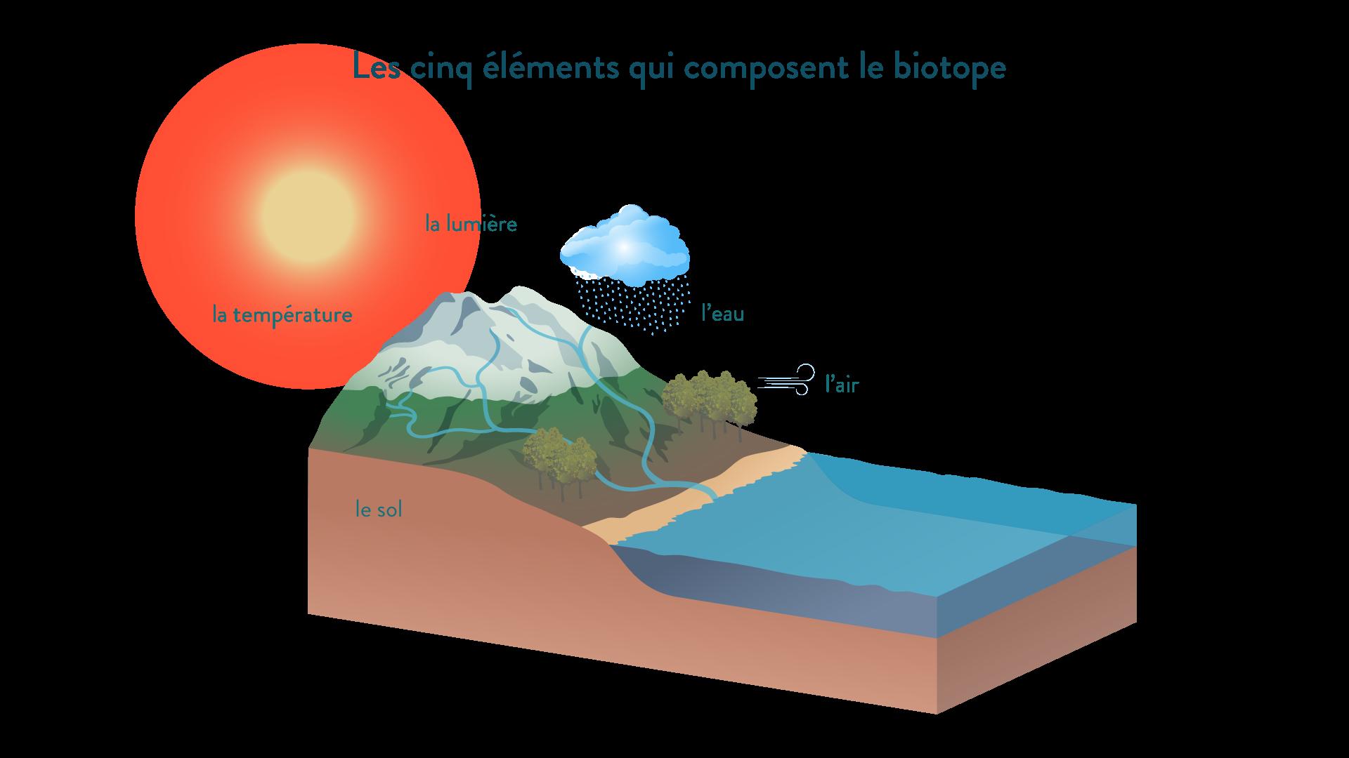 Les cinq éléments qui composent le biotope