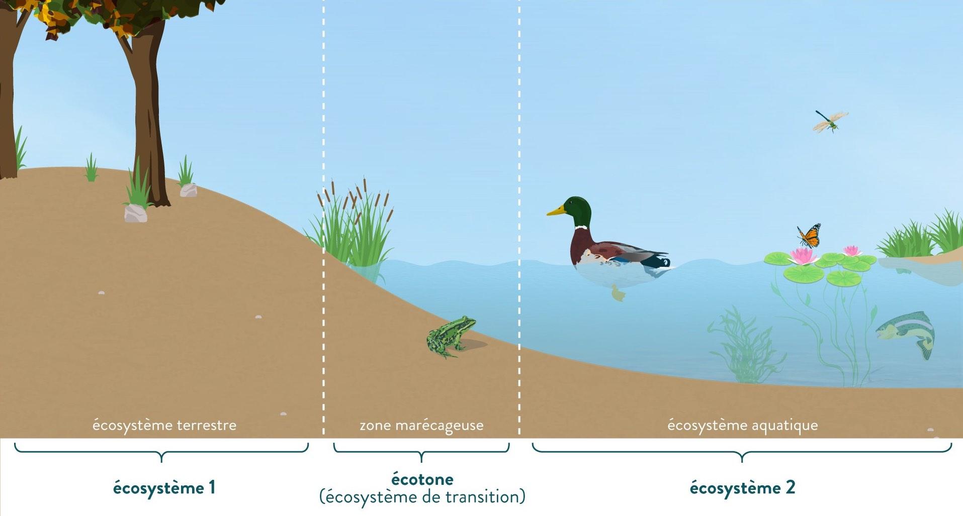berge écotone écosystème