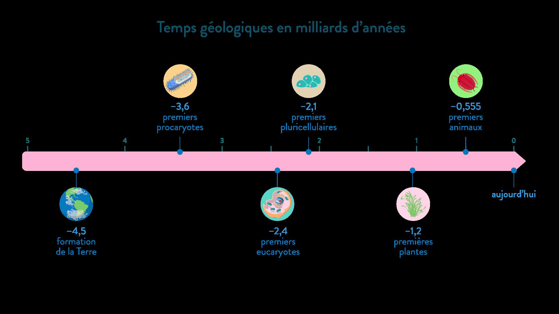 L'histoire des êtres vivants temps géologiques