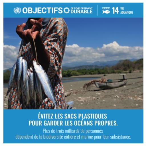 La Vie aquatique - Objectif de Développement Durable n°14 - géographie -terminale - SchoolMouv