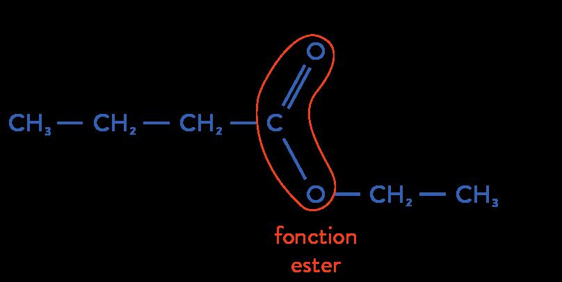 structure des molécules organiques physique chimie terminale ester