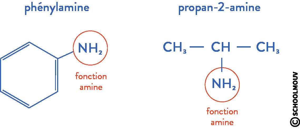 structure des molécules organiques physique chimie terminale amine