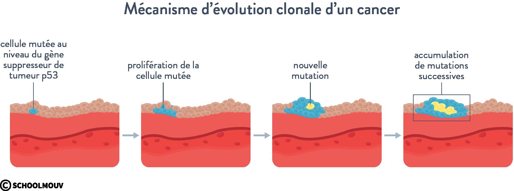 Mécanisme d'évolution clonale d'un cancer tumeur maligne bénigne